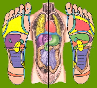 Reflexology is based on the principle that there are reflexes in the feet, hands and ear which correspond to every part of the body.